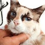 Сколько стоит удалить опухоль у кошки?