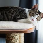 Сколько в среднем стоит содержание кошки в месяц