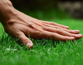 Сколько в среднем стоит газонная трава