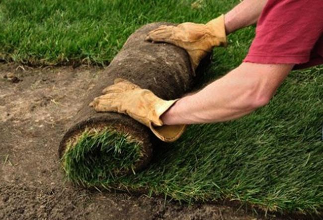 Рулонная трава