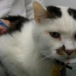 Сколько стоит анализ на токсоплазмоз у кошек
