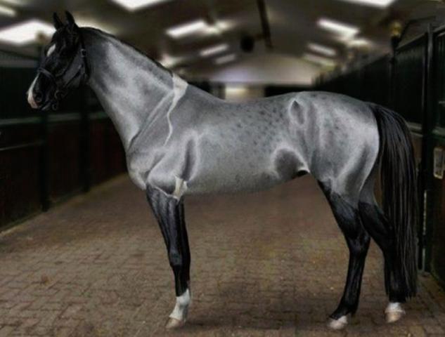 Красивая Ахалтекинская лошадь
