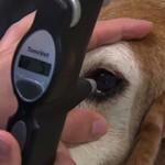 Сколько стоит операция по удалению катаракты собаке